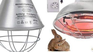 Exemple de lampes chauffantes pour poussins